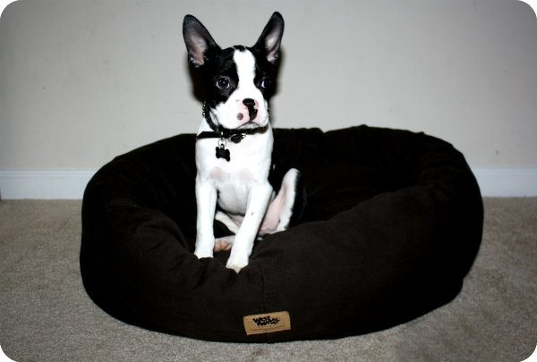 West Paw Designs Organic Bumper Dog Bed Real Mom Reviews