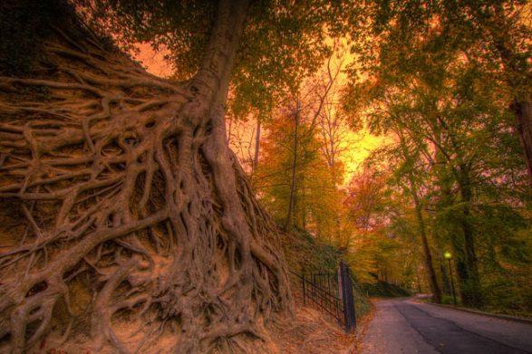 tree-greenville-swamp-rabbit-trail
